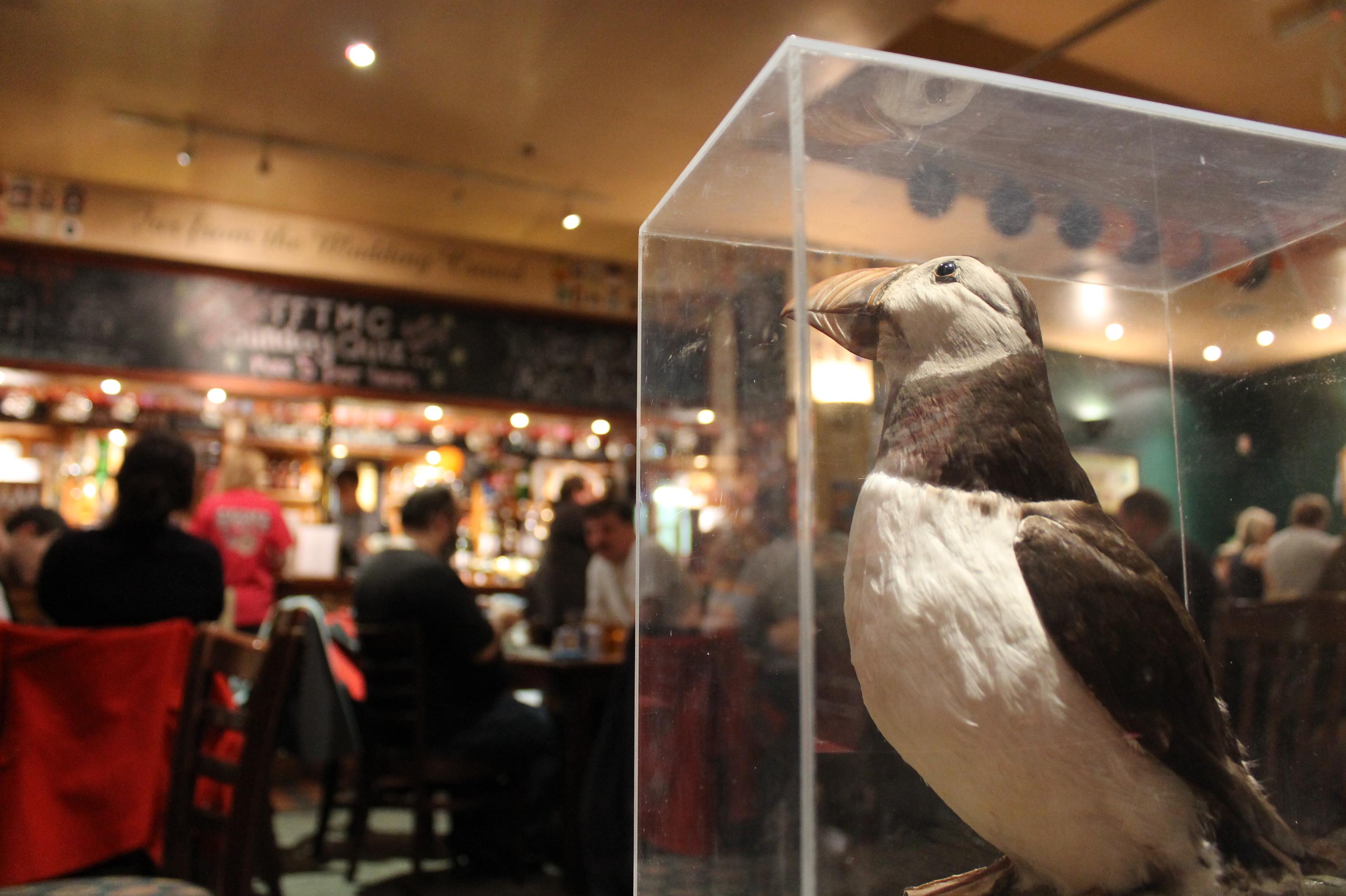 fftmc puffin bar
