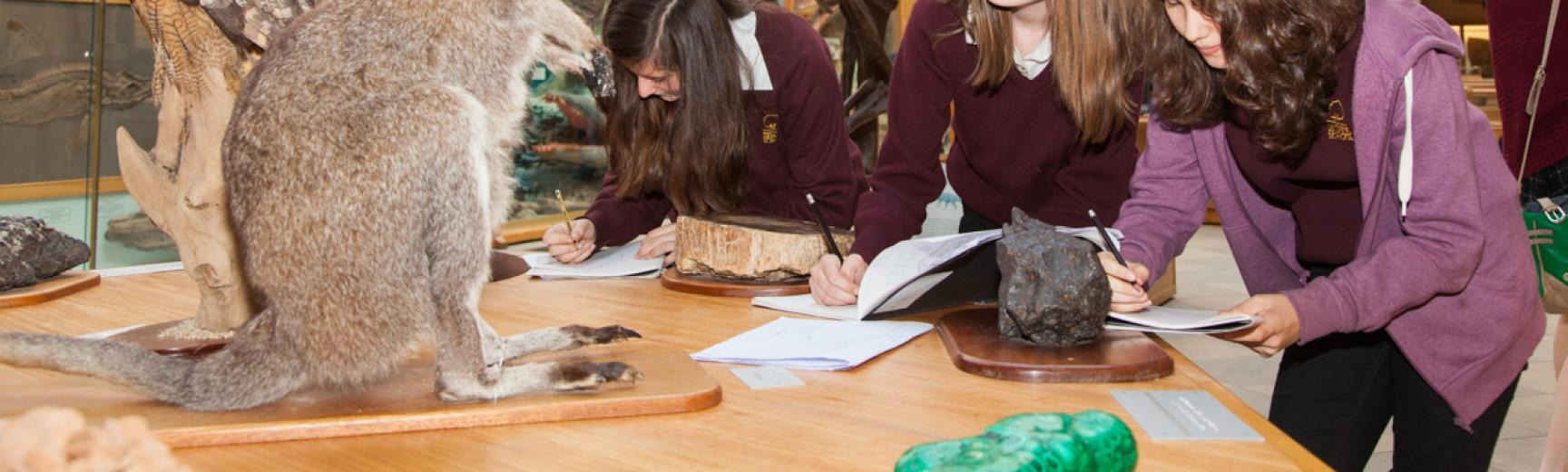 secondary schools art at the Museum of Natural History