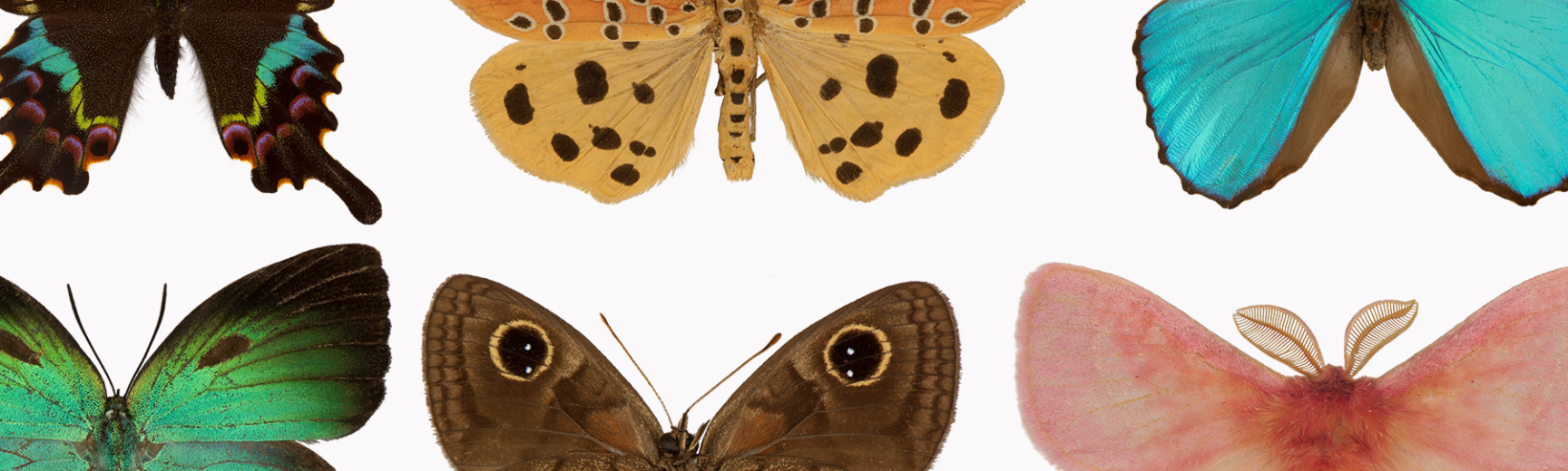 butteflies light touch