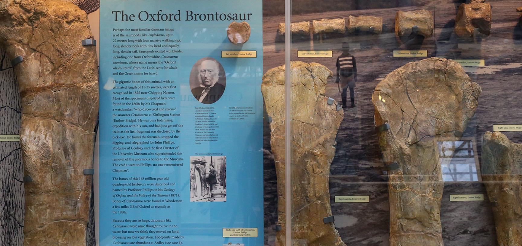 Cetiosaurus oxoniensis