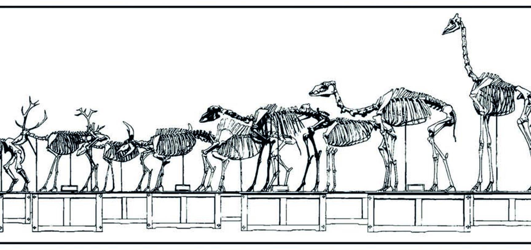 mammals by tim heath honourable mention