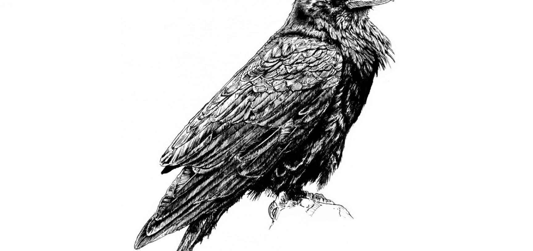 Raven by Mark Wright of Toadink