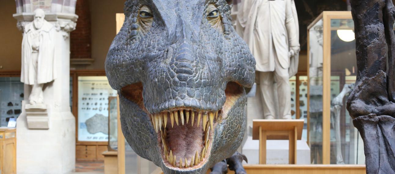 t rex in museum jpeg