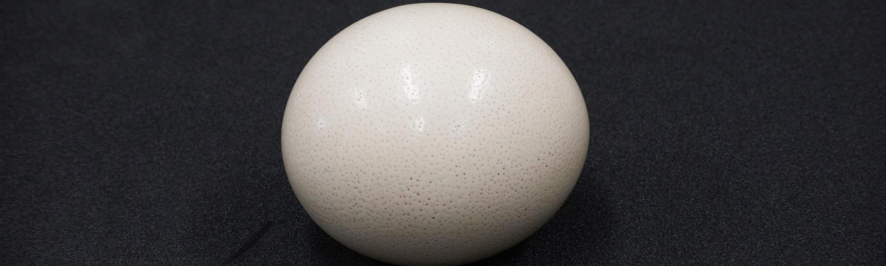 pic for whose egg