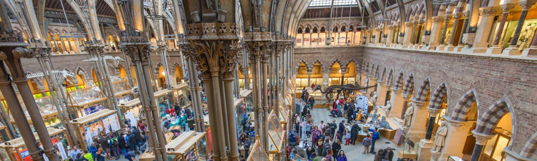 Oxford Museum of Natural History interior