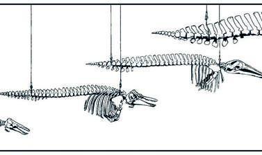 cetaceans by tim heath honourable mention