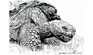 Giant tortoise by Mark Wright of Toadink