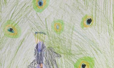 peacock by imogen highly commended 5 7 year old category