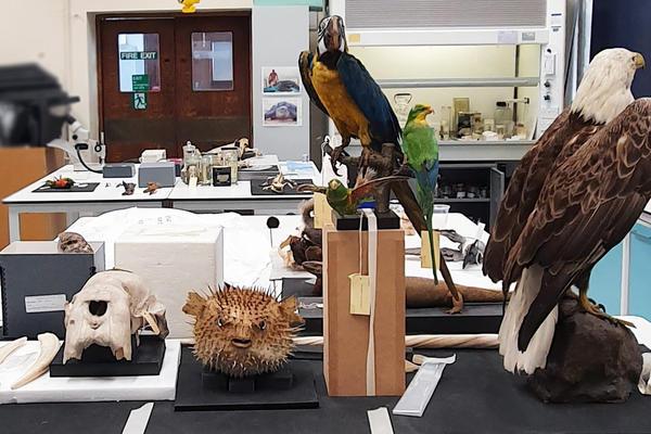 conservation specimens