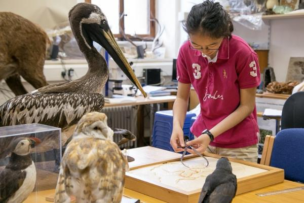 Natural History student working with bird specimens
