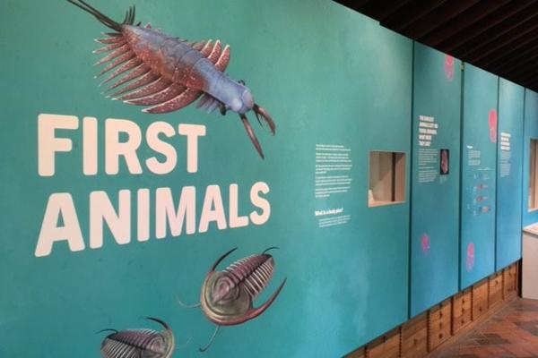 The First Animals exhibition at Oxford University Museum of Natural History