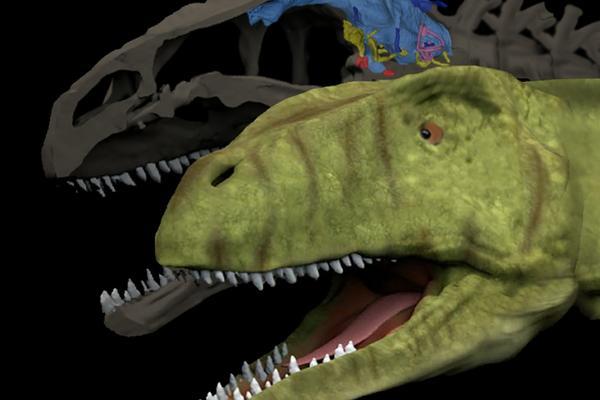 allosaurus brain