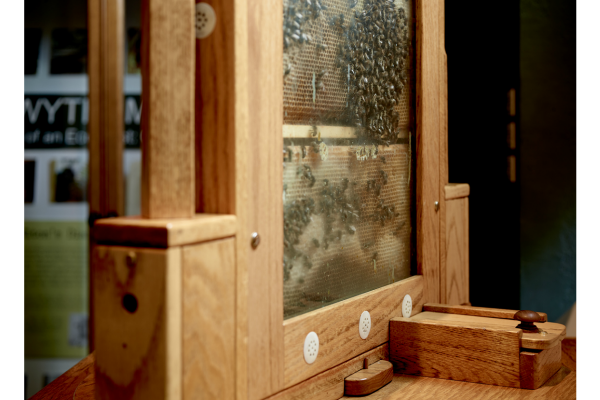 A side view of our hive, showing where the bees are fed from during the winter months