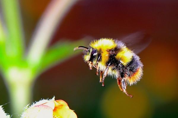 bumble bee 2361336