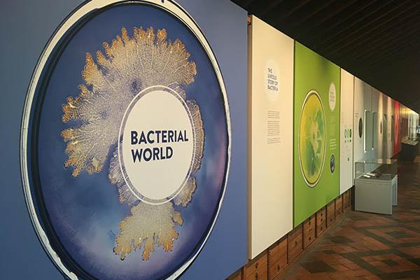 View down the bacterial world exhibition corridor