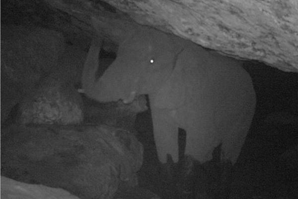 caveelephant