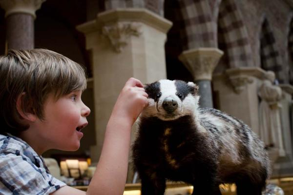 Child badger at the museum