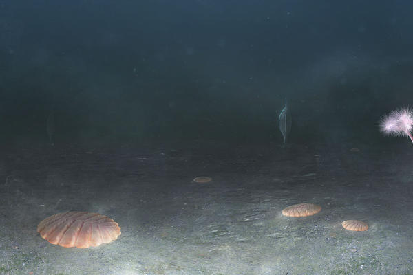 Ediacaran sea floor, Newfoundland, Canada - 560 million years ago