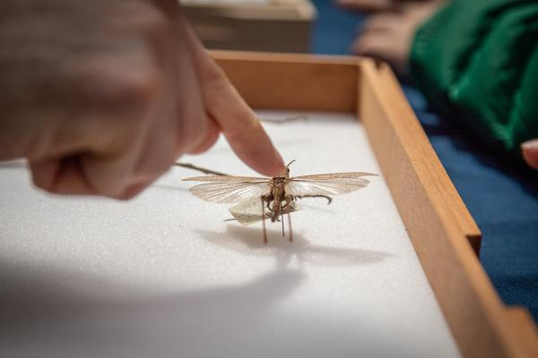 Researcher explaining insects at a public event at the Museum