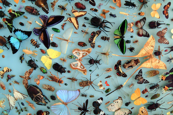 The diversity of insects - Oxford University Museum of Natural History