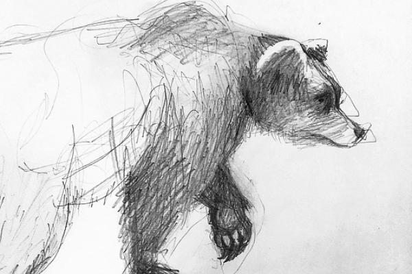 monday drawing bear