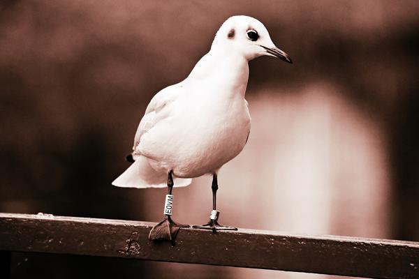 sea gull 3890540