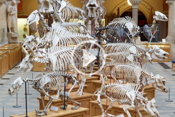 skeleton parade audio
