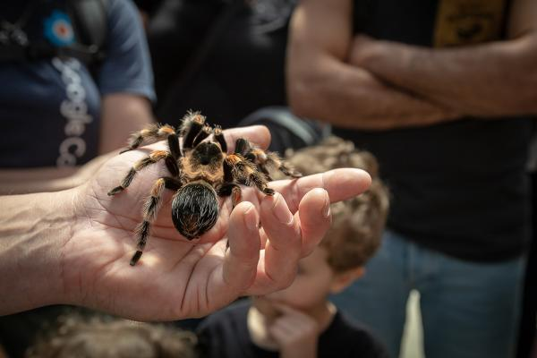 tarantula hands