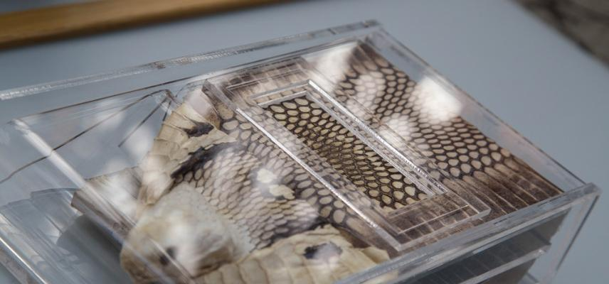 Sensing Evolution Touchable Snake Skin