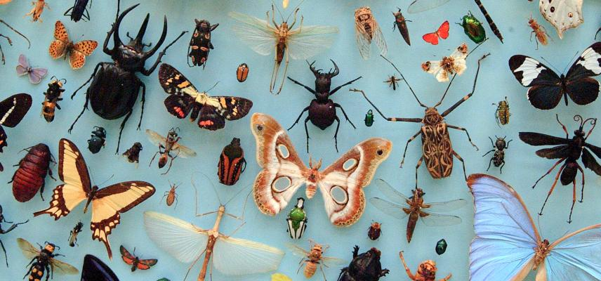 Insects collection, Oxford Museum of Natural History