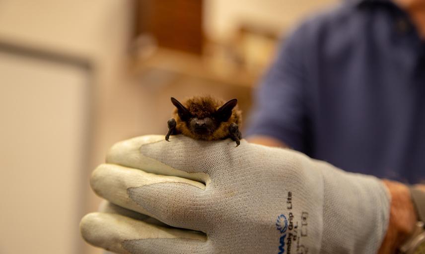 Bat close-up at the Museum