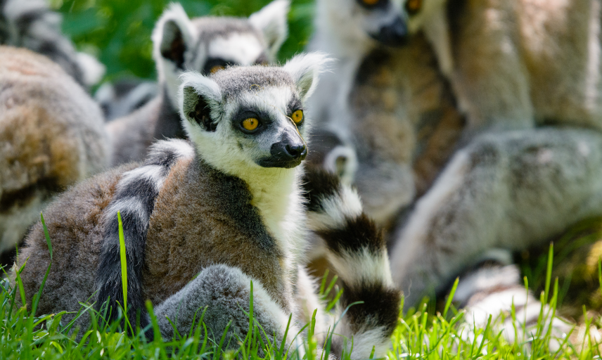 lemur mathias appel pd