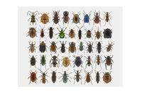 Colourful insects from the HOPE collection on a white background