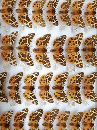 marvellous moths